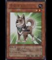 Shiba-Warrior Taro